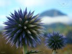 Fond écran : fleurs sauvages de montagne